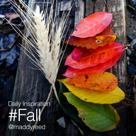 fall photography