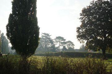 park trees autumn mist