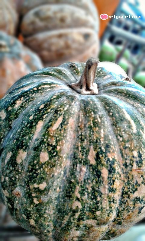 photography food orange thankful