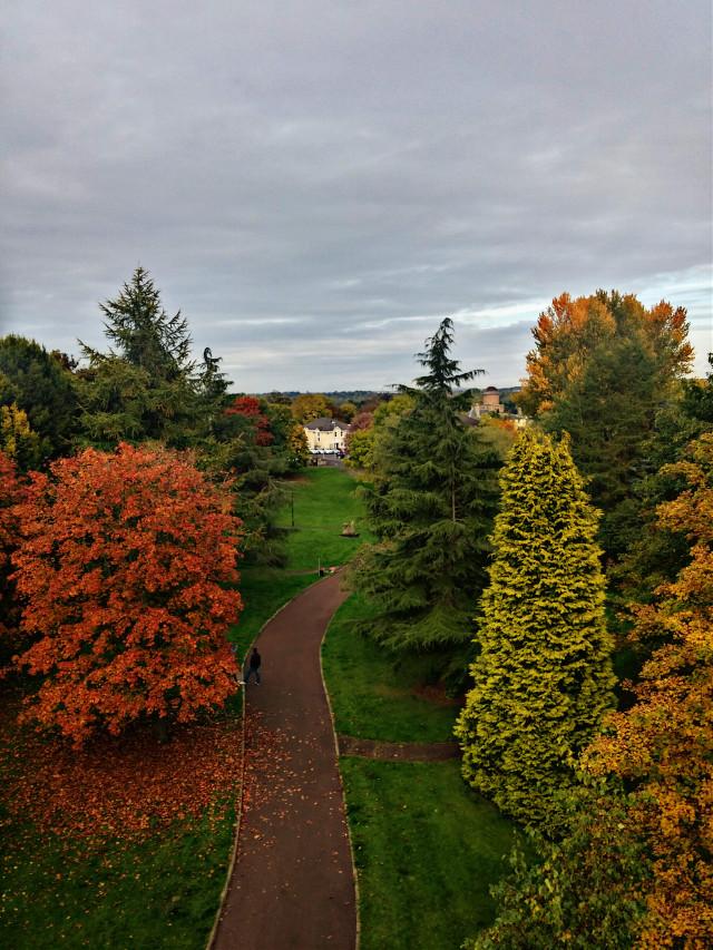 #nature  #scottish autumn
