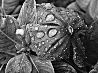 macro flower hdr blackandwhite photography