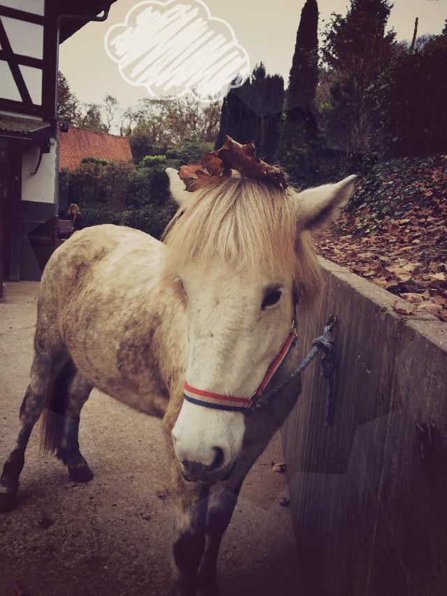 Heute war wider reiten 😄 zum letzten mal für dieses jahr sind wir ausgeritten baldi ist abgegangen ich sags euch erstes mal gelofen abends und ja richtig arg und gehopst gestiegen naja hat trozdem spaß gemacht 🌻🐎   #twilight  #shapemask  #herbst #autumn  #wolke #cloud #clipart #horse #pony #balduspra  #krone #blätter #riding #stable #wppanimals  #wppanimales  #wppanimal #wppanimals #wppanimals #wppanimals #isilove