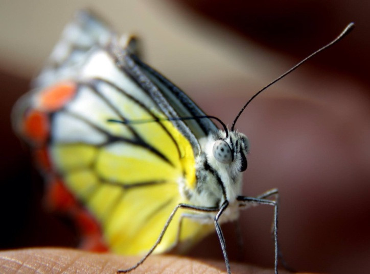 The lense of a butterfly eye