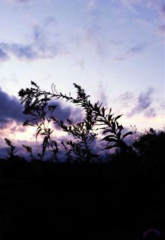 silhouette sky sunset fall art