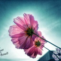 photography sky flower nature freetoedit