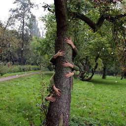 tree woods hands