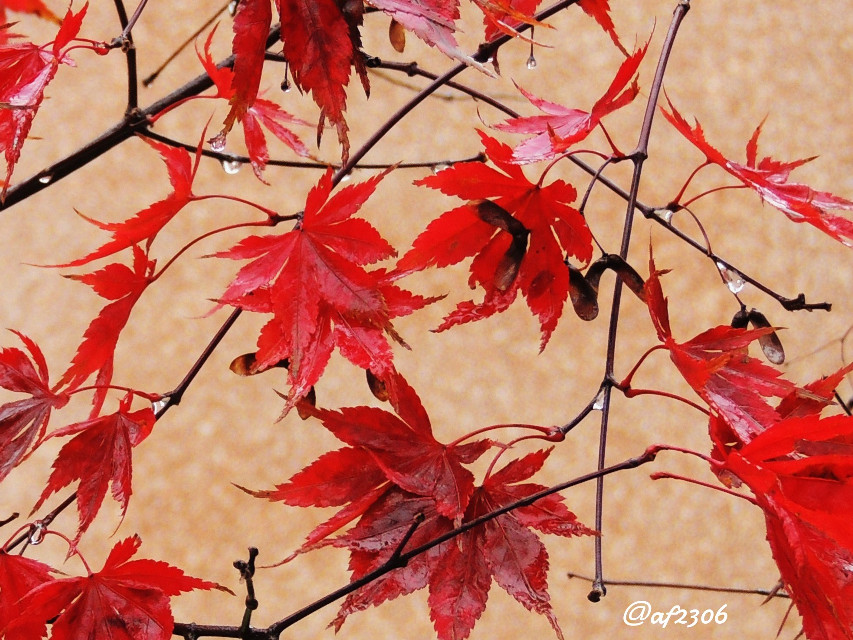 #colorplay #leaf  #nature #fall  #autumn