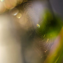 spidee nature photography blur_effect