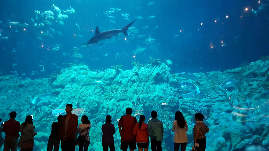 #shark #fish #underwater