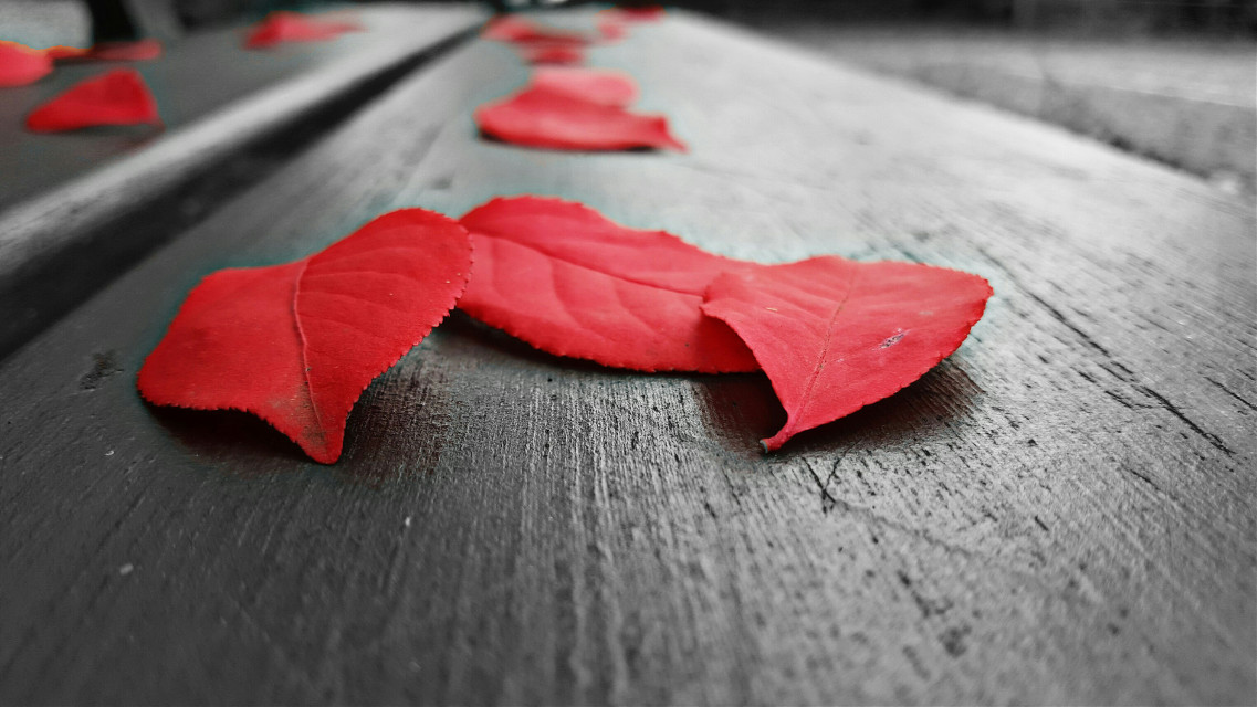 #photography #nature #love #autumn #leaves #freetoedit  #red #fall