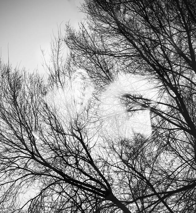 #freetoedit #doubleexposure #bw #blackandwhite #trees  #face #grig15    #nophotoshop  #mark3  #markiii