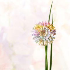pastel flower madewithpicsart