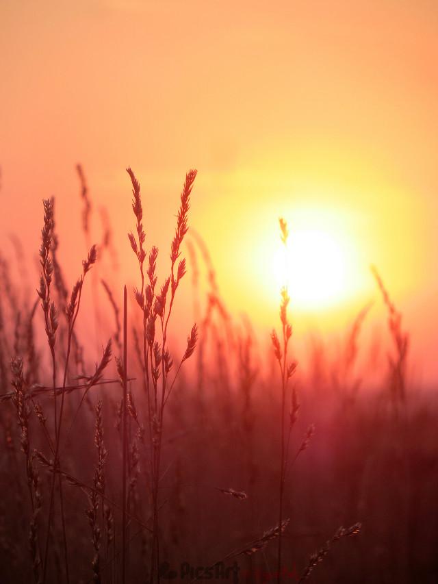 Have a wonderful evening dear friends 😘   #photography #nature #wppsunnyday #sunset #sun