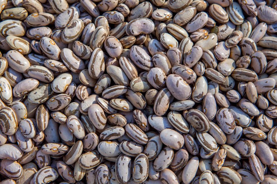 #freetoedit #bean #beans #food #healty #vegetable #texture #pattern #grig15