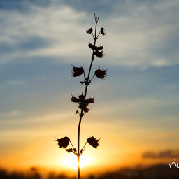 nature photography love sunrise