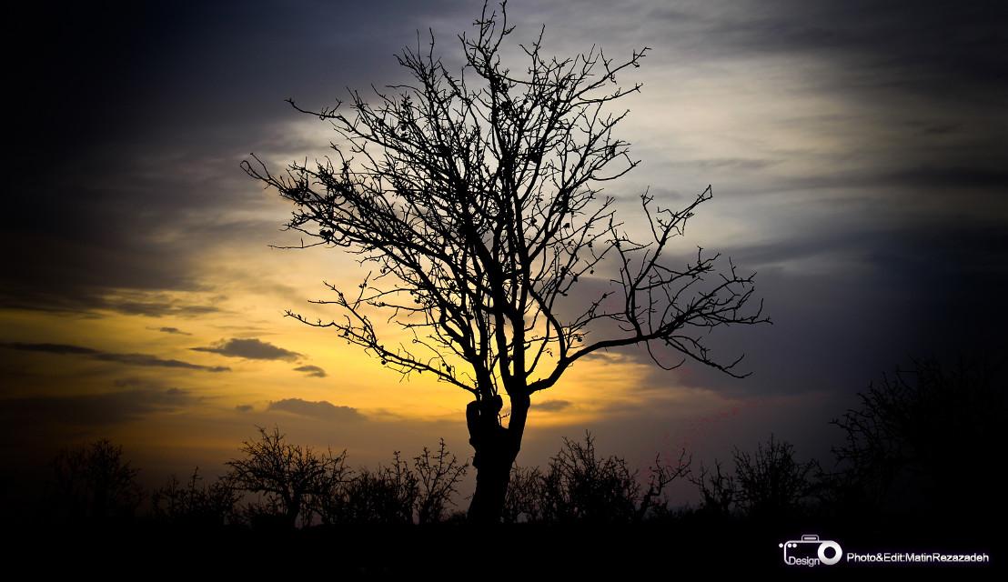 ShaahinShahr-baagh pesteh Photo : Matin Rezazadeh  #sunset  #natural  #god art