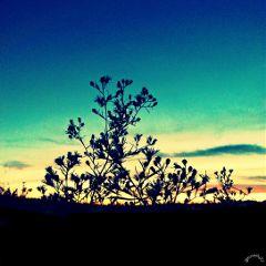 sunset crossprocess1 crossprocess2 sky photography