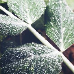 photography morning dewdrop dewdrops leaf