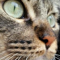 pccolorgreen colorgreen myphotography cat pchappypetday pcmypetsbestportrait mypetsbestportrait