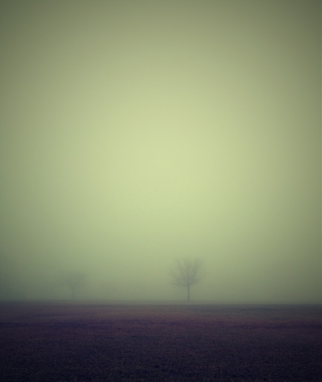 #foggy#love  #nature #photography