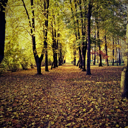 colorful colorsplash nature oldphoto freetoedit