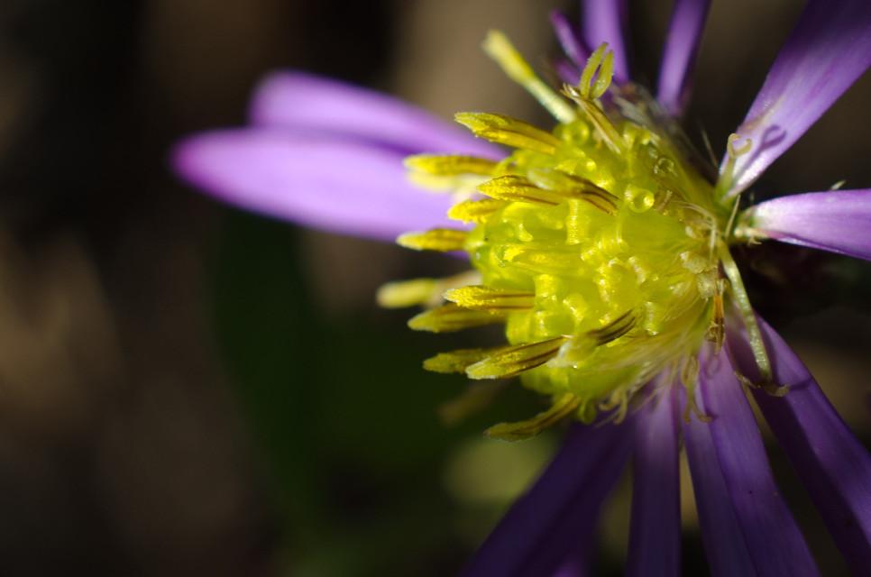 #flower#yellow#macro