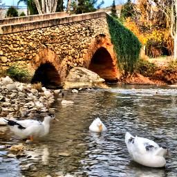 hdr ducks bridge pcbeautifulscenery puente pcpcbridges pcbridges pcworldphotoday pcunderpassandoverpass pcbridgephoto pcmadeofstone