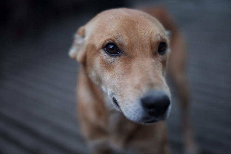 #freetoedit #dog #portrait #animals #look #photography