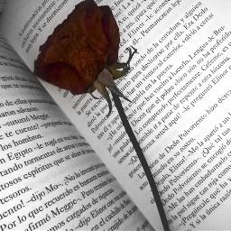 book rose love