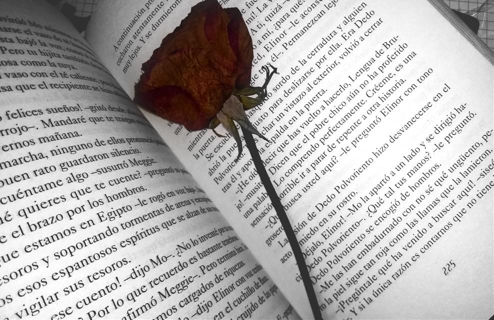 #book  #rose  #love ❤
