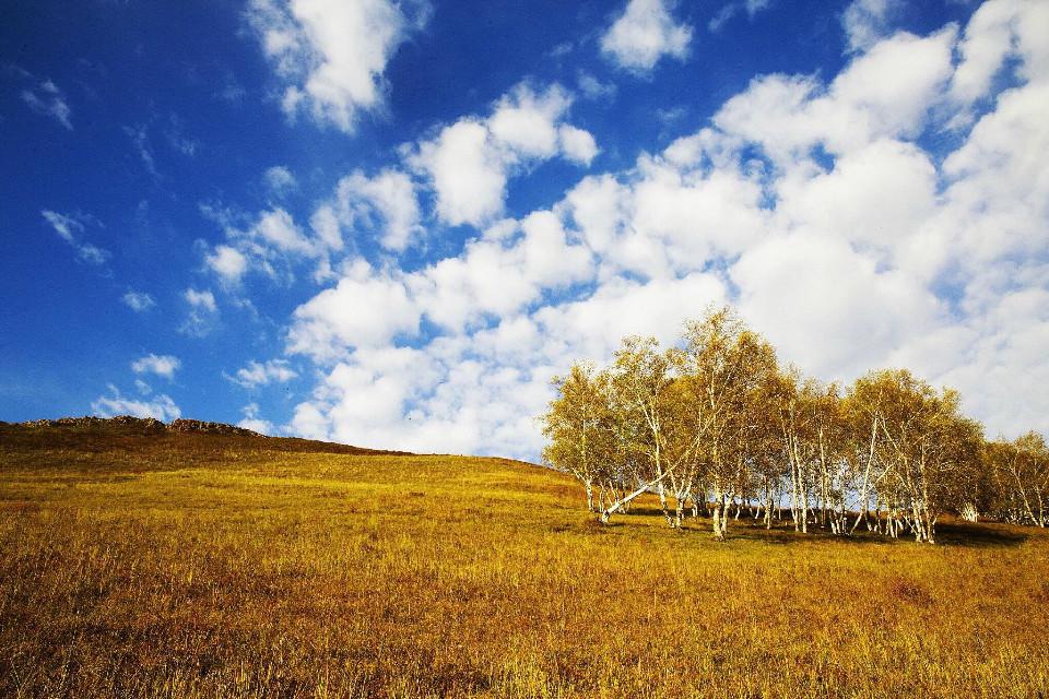 #grassland #sky