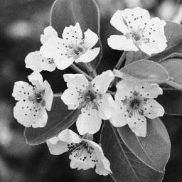 blackandwhite flower