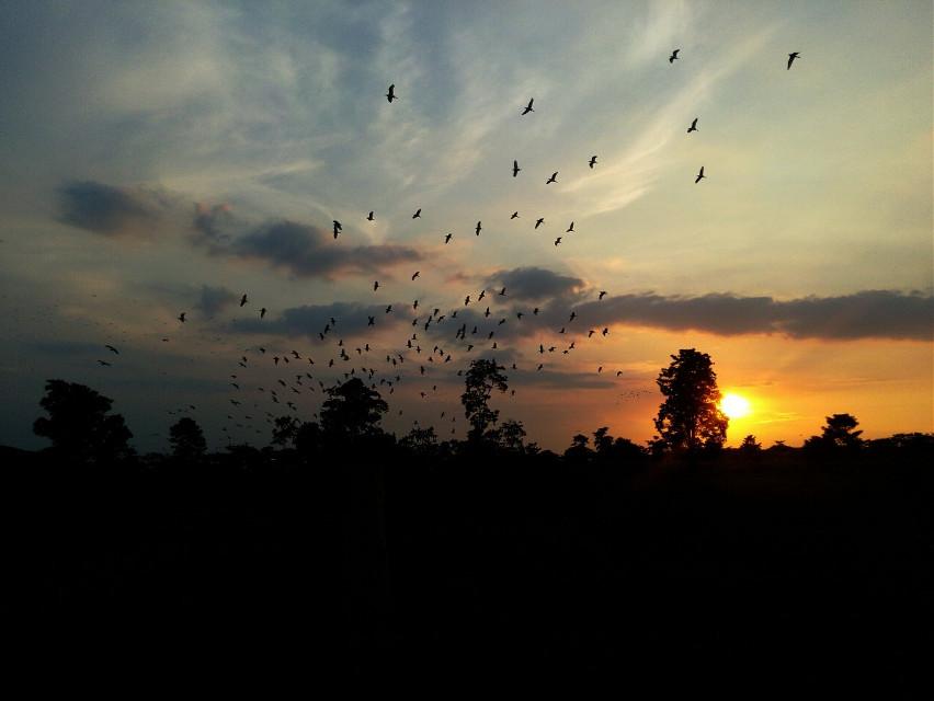 #sunset #venezuela #nature #freetoedit #colorful #photography #travel #paisaje puesta de sol en Venezuela esperó les guste n.n #follow