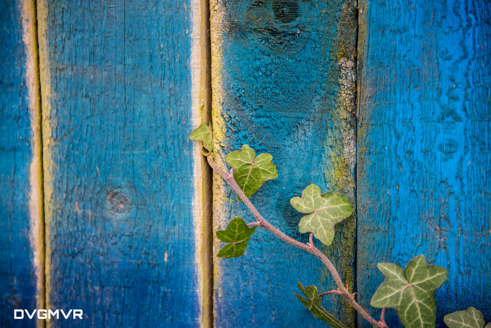 Time flies ... th♡♡♡nk you for all comments,  got to get busy in real world, but not without leaving  a full colored image inspired by Amy! :) ♡  #blue and #green #photography #nature #texture