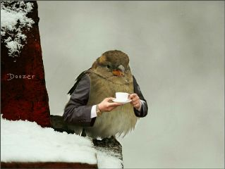 collage freetoedit birds illusions