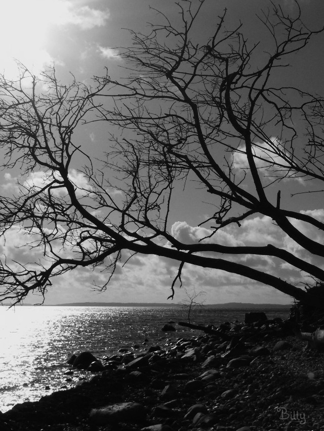 #myinspiration the #sea  Wish you all a great day my dear friends♡  #quotes #blackandwhite #trees #nature #sun #clouds  My soul is full of longing for the secret of the sea, and the heart of the great ocean sends a thrilling pulse through me. Henry Wadsworth Longfellow