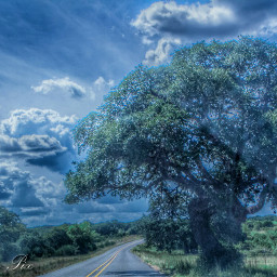 nature tree sky beauty