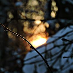 nature photography snow winter sunset