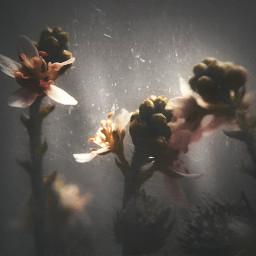 vintage blurred dimmed macro obscure