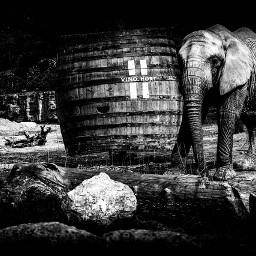 animallovers animallover animal elephant elefant