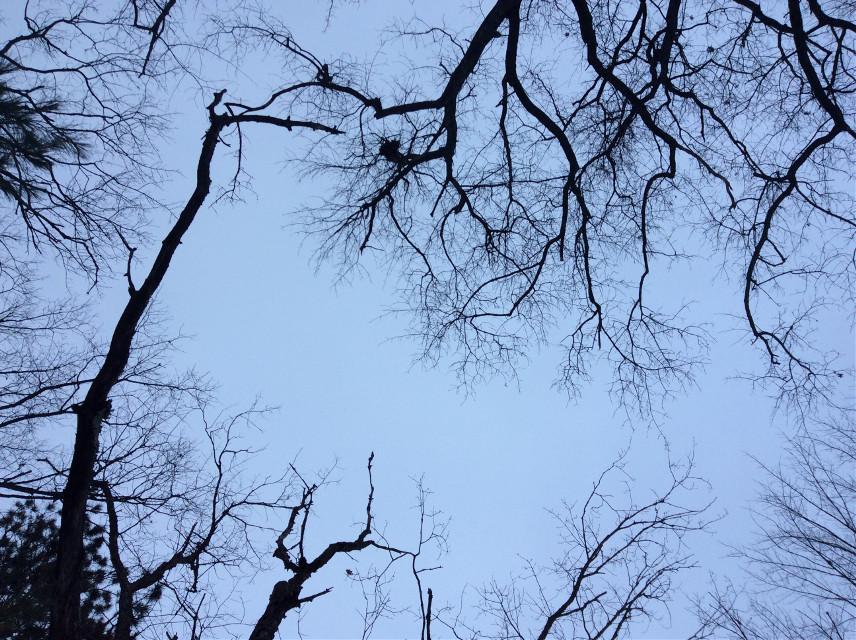 #nature#tree#sky