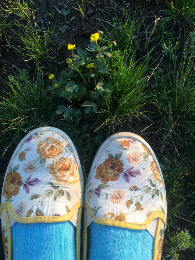 #summer #flowers #grass #picture