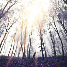 freetoedit rays trees jungle forest