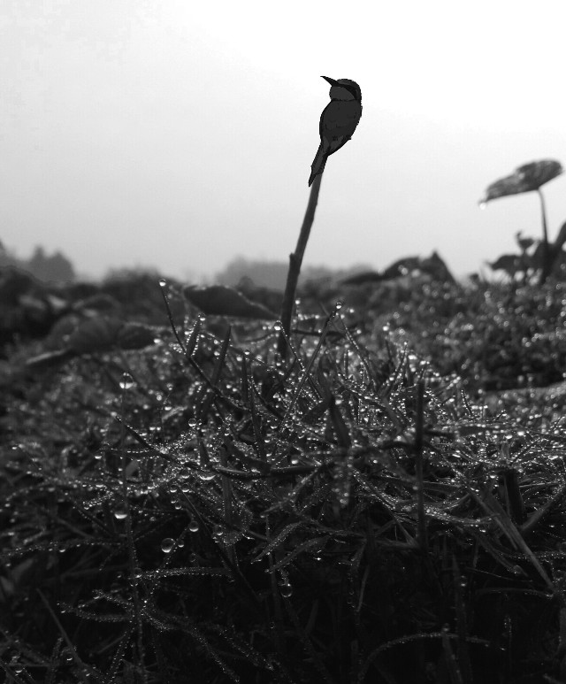 #photography#blackandwhite #nature#winter #silver