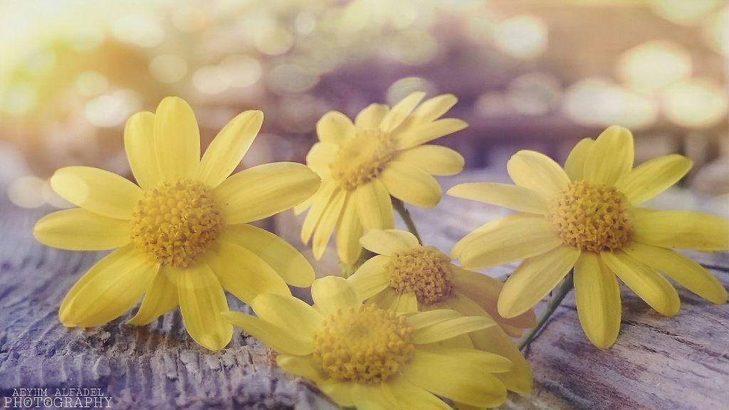 Good morning flower flowers rose yellow love emotio good morning flower flowers rose yellow love emotio mightylinksfo