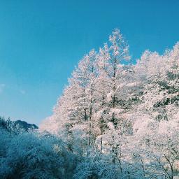 snow winter white landscape nature