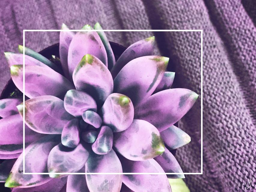 Purple plant #wappurplehue #photography #plant #interesting #retro