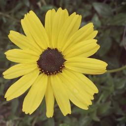sunflower myfavorite flower nature hikingadventure