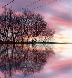 sunset trees sky reflections mirroreffect