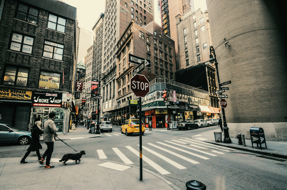 #grittystreets #streetphotography #manhattan #newyork #nyc #people #love #fashion #2016 #fuji  #crosswalk  #photography #travels  #street  #dog